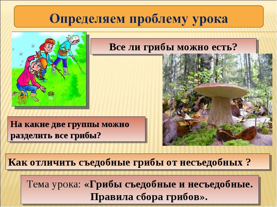 На какие две группы можно разделить все грибы? Как отличить съедобные грибы о...