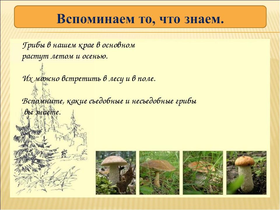Грибы в нашем крае в основном растут летом и осенью. Их можно встретить в лес...