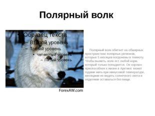 Полярный волк Полярный волк обитает на обширных пространствах полярных регион