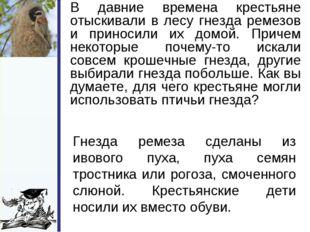 В давние времена крестьяне отыскивали в лесу гнезда ремезов и приносили их д