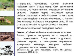 Специально обученные собаки помогали чабанам пасти стада овец. Они выполняли