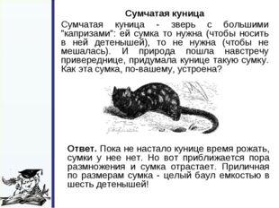 """Сумчатая куница Сумчатая куница - зверь с большими """"капризами"""": ей сумка то"""