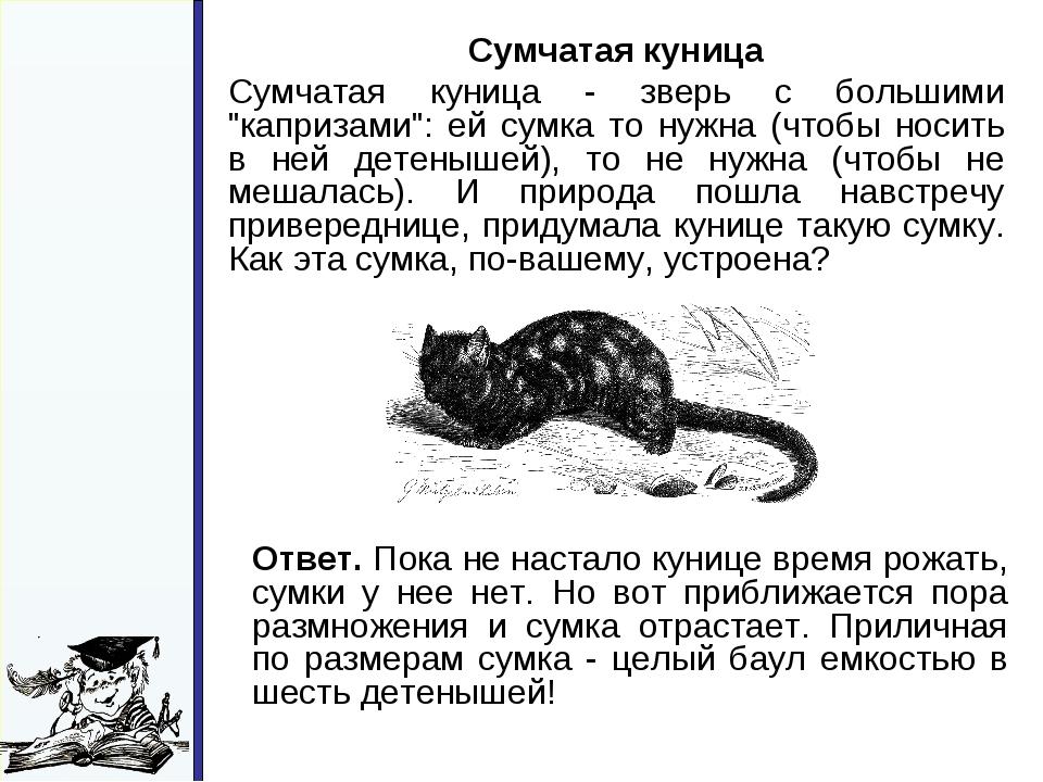"""Сумчатая куница Сумчатая куница - зверь с большими """"капризами"""": ей сумка то..."""