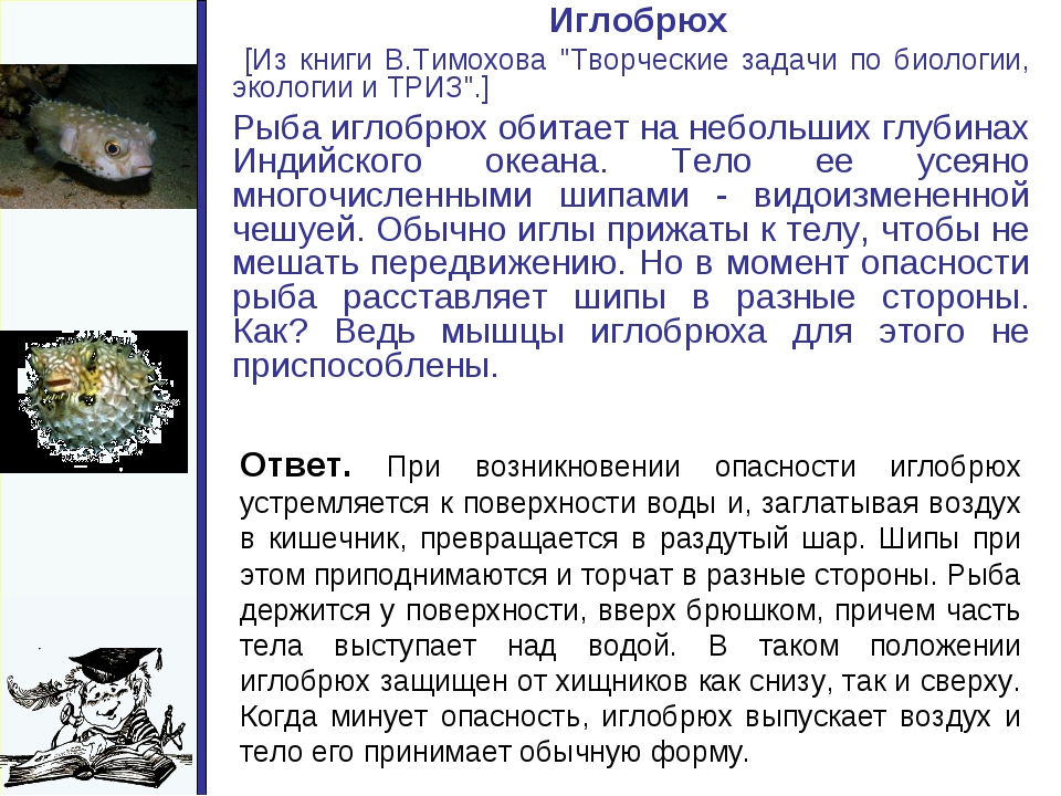 "Иглобрюх [Из книги В.Тимохова ""Творческие задачи по биологии, экологии и Т..."
