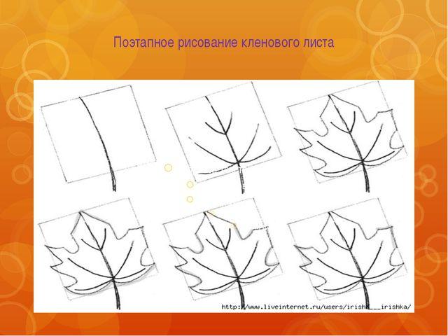 Поэтапное рисование кленового листа