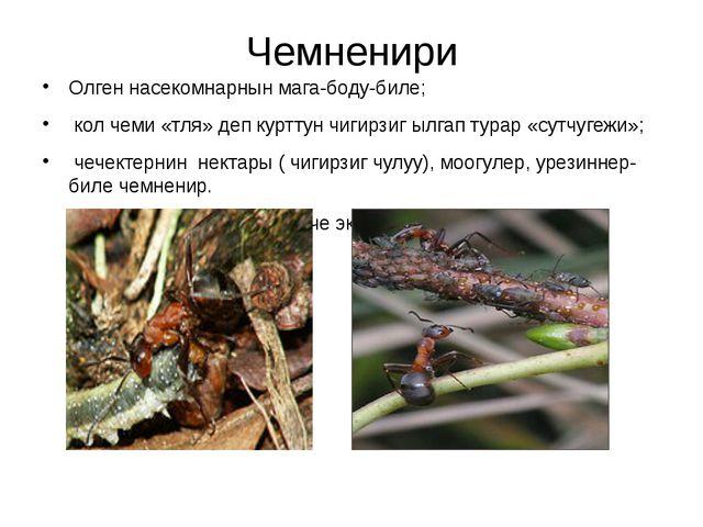 Чемненири Олген насекомнарнын мага-боду-биле; кол чеми «тля» деп курттун чиги...