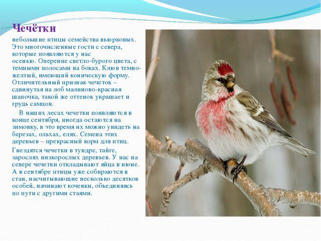 Чечётки небольшие птицы семейства вьюрковых. Это многочисленные гости с сев...