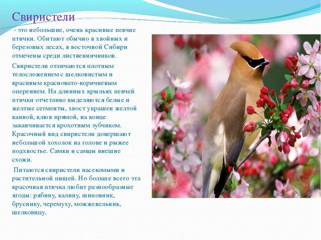 Свиристели - это небольшие, очень красивые певчие птички. Обитают обычно в хв...