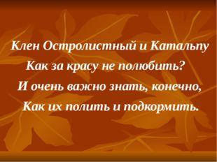Клен Остролистный и Катальпу Как за красу не полюбить? И очень важно знать, к