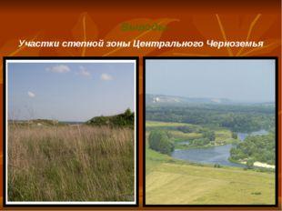 Участки степной зоны Центрального Черноземья Выводы