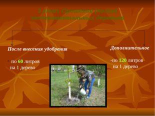 3 этап. Орошение (полив) экспериментальных деревьев После внесения удобрения