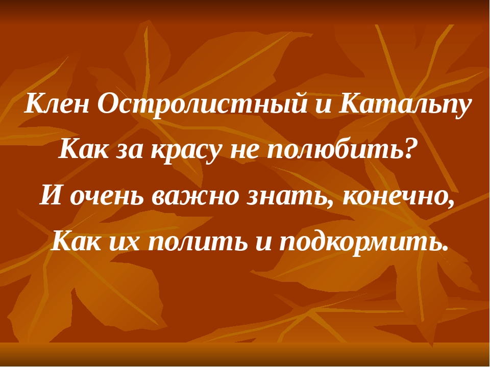 Клен Остролистный и Катальпу Как за красу не полюбить? И очень важно знать, к...