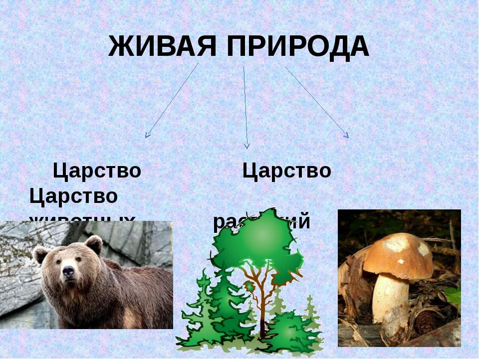 ЖИВАЯ ПРИРОДА Царство Царство Царство животных растений грибов