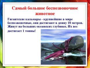 Гигантские кальмары - крупнейшие в мире беспозвоночные, они достигают в длин