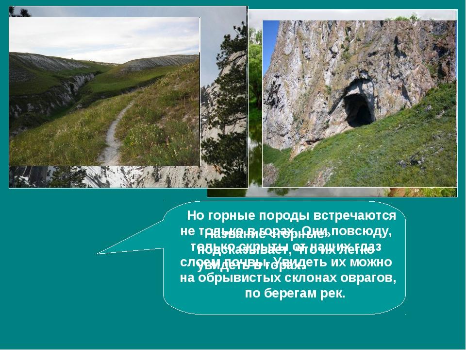 Название «горные» подсказывает, что их легко увидеть в горах. Но горные поро...