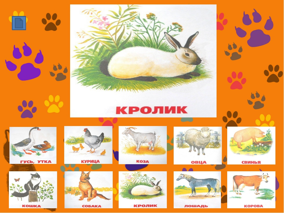 http://sarapulmama.ru/wp-content/uploads/2013/02/domashnie-zhivotnyie-Gus-Ut...