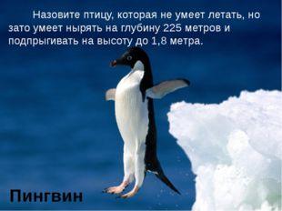Назовите птицу, которая не умеет летать, но зато умеет нырять на глубину 225