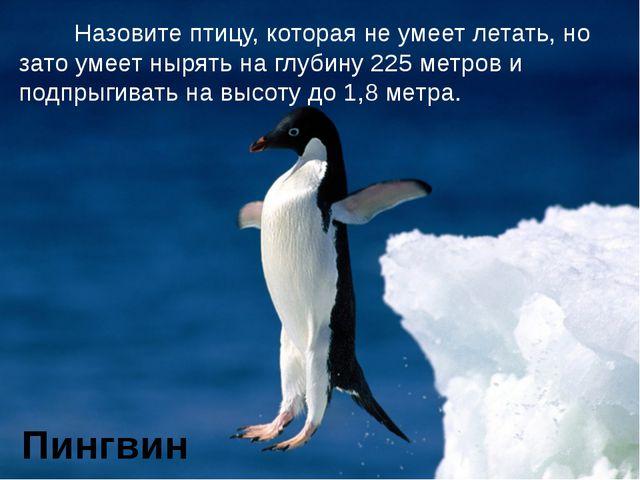 Назовите птицу, которая не умеет летать, но зато умеет нырять на глубину 225...