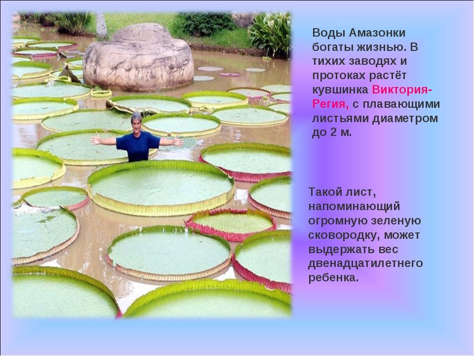 Воды Амазонки богаты жизнью. В тихих заводях и протоках растёт кувшинка Викто...
