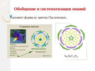 Обобщение и систематизация знаний Назовите формулу цветка Пасленовых.
