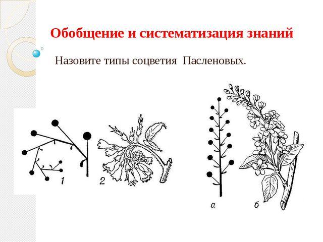 Обобщение и систематизация знаний Назовите типы соцветия Пасленовых.