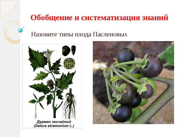Обобщение и систематизация знаний Назовите типы плода Пасленовых