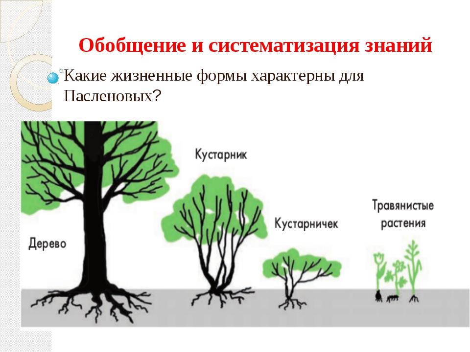 Обобщение и систематизация знаний Какие жизненные формы характерны для Паслен...
