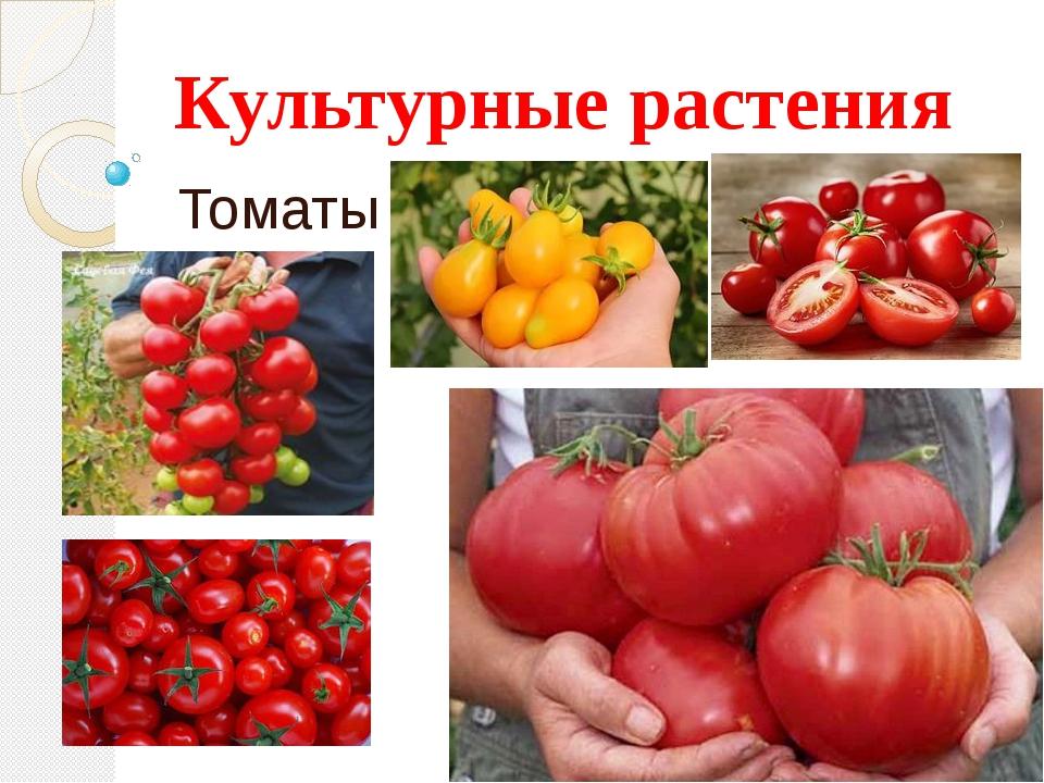 Культурные растения Томаты