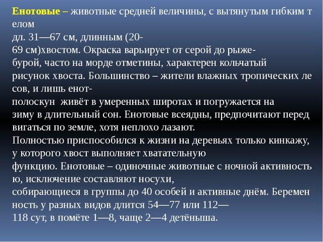 Енотовые–животныесреднейвеличины,свытянутымгибкимтелом дл.31—67см,...