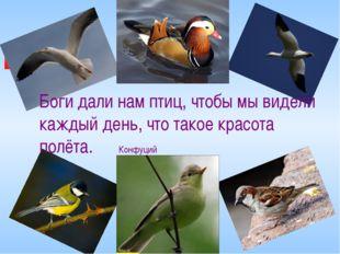 Боги дали нам птиц, чтобы мы видели каждый день, что такое красота полёта. Ко