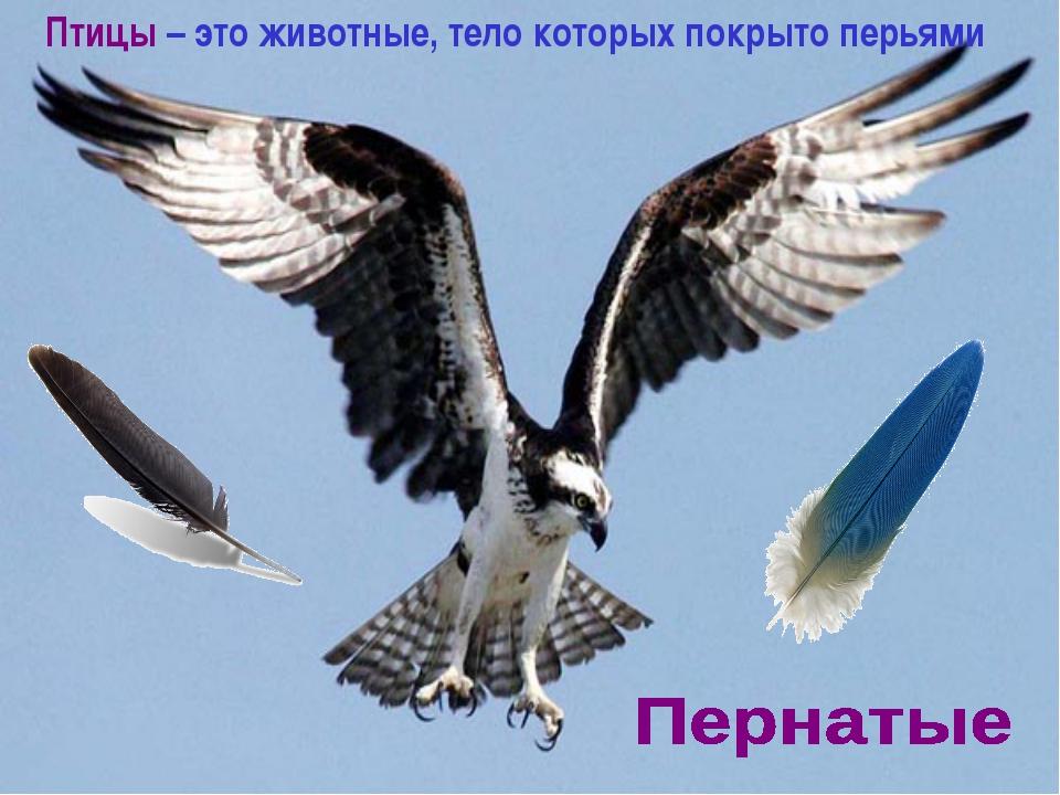 Птицы – это животные, тело которых покрыто перьями