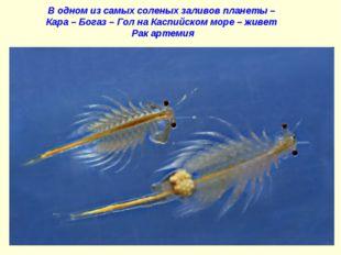 В одном из самых соленых заливов планеты – Кара – Богаз – Гол на Каспийском м