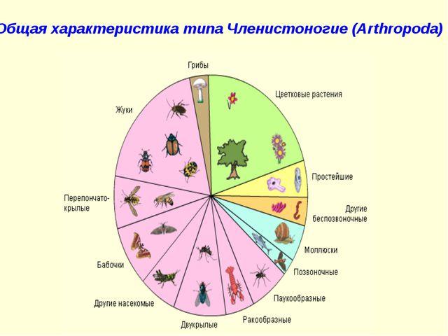 Общая характеристика типа Членистоногие (Arthropoda)