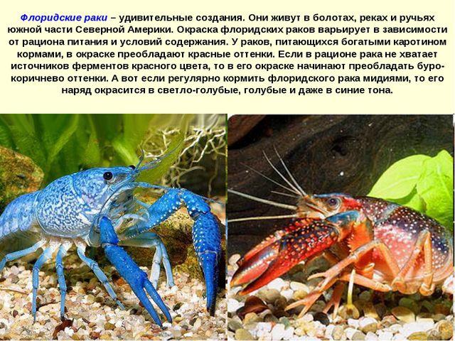 Флоридские раки – удивительные создания. Они живут в болотах, реках и ручьях...