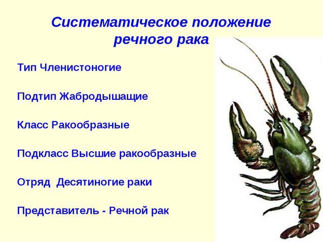 Систематическое положение речного рака Тип Членистоногие Подтип Жабродышащие...