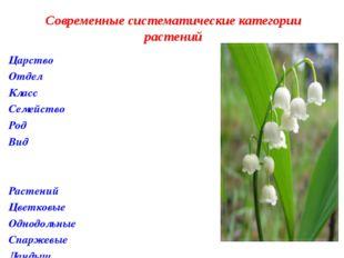 Царство Отдел Класс Семейство Род Вид Растений Цветковые Однодольные Спаржевы