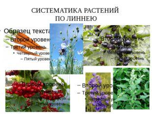 СИСТЕМАТИКА РАСТЕНИЙ ПО ЛИННЕЮ Например, в класс растений с пятью тычинками о