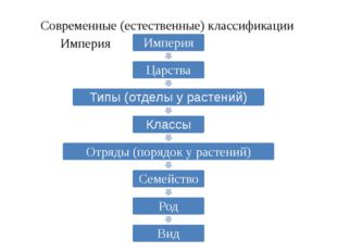 Современные (естественные) классификации Основывается не только на внешнем сх