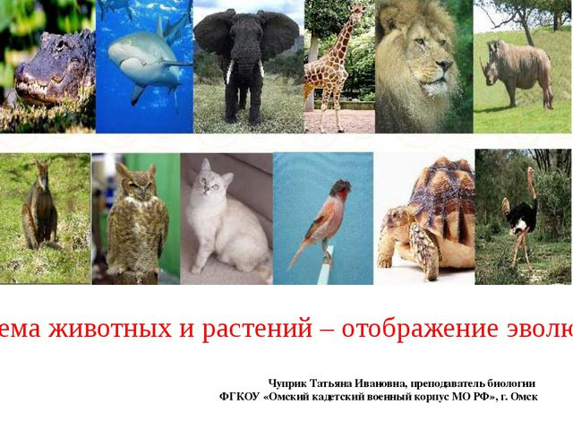 Система животных и растений – отображение эволюции Чуприк Татьяна Ивановна,...