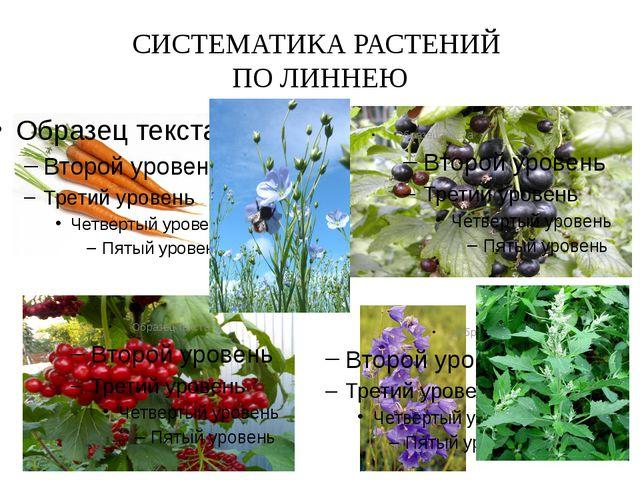 СИСТЕМАТИКА РАСТЕНИЙ ПО ЛИННЕЮ Например, в класс растений с пятью тычинками о...