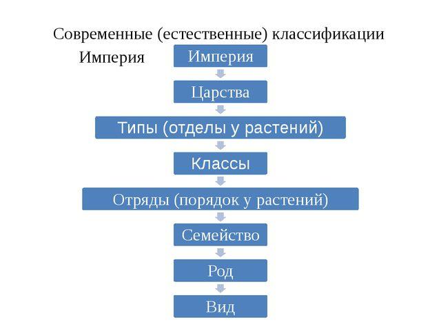 Современные (естественные) классификации Основывается не только на внешнем сх...