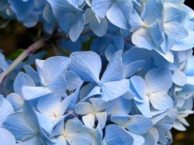http://everystockphoto.s3.amazonaws.com/flower_macro_close_228528_l.jpg