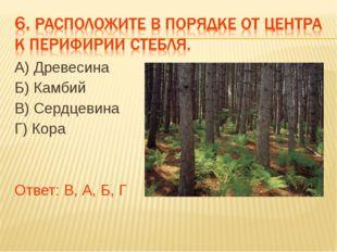 А) Древесина Б) Камбий В) Сердцевина Г) Кора Ответ: В, А, Б, Г