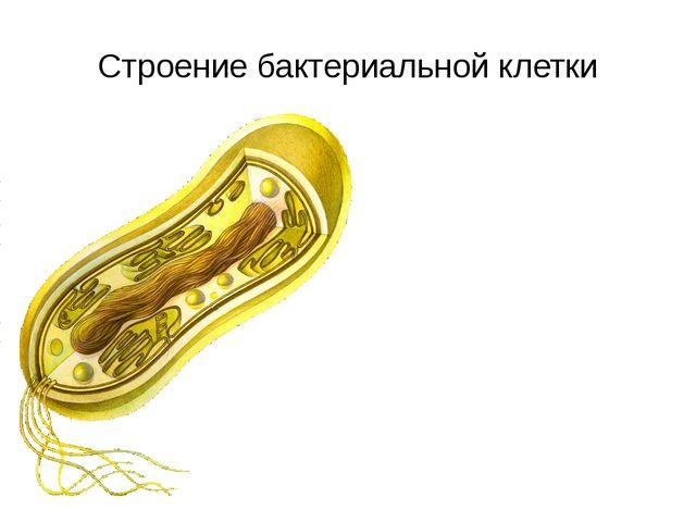 Строение бактериальной клетки Клеточная стенка Плазматическая мембрана нить Д...