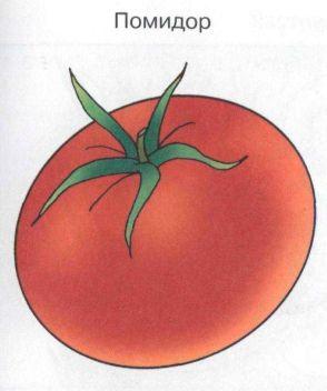 помидор, рассказ по картинке