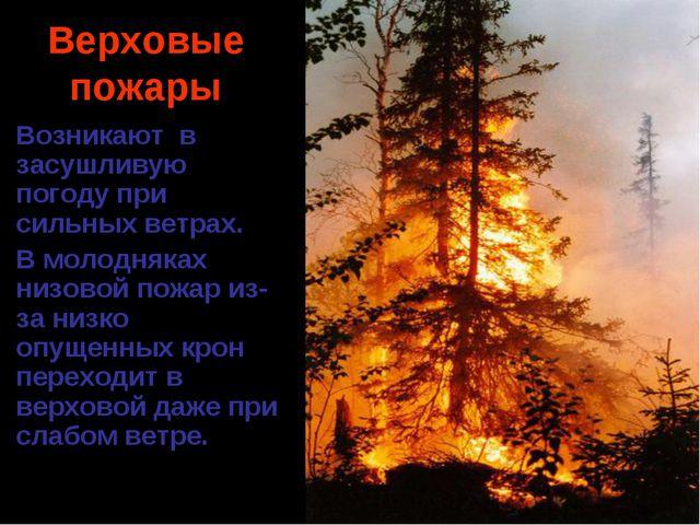Верховые пожары Возникают в засушливую погоду при сильных ветрах. В молодняка...