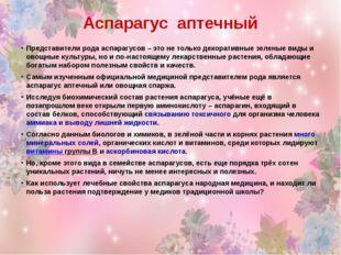 Аспарагус аптечный Представители рода аспарагусов – это не только декоративны