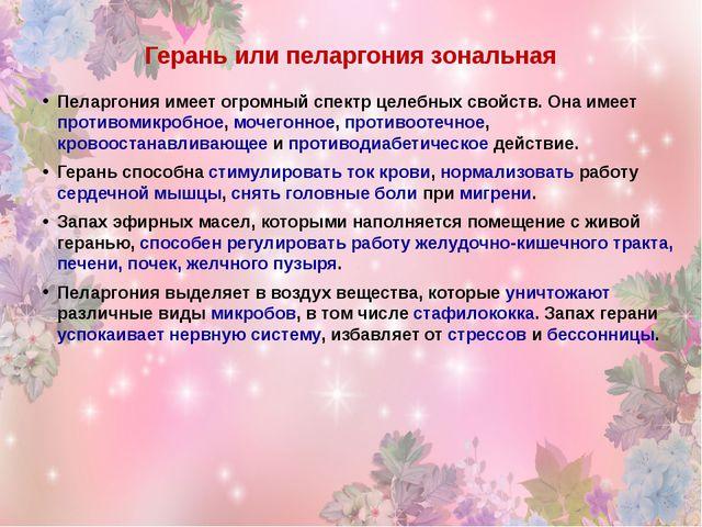 Герань или пеларгония зональная Пеларгония имеет огромный спектр целебных сво...