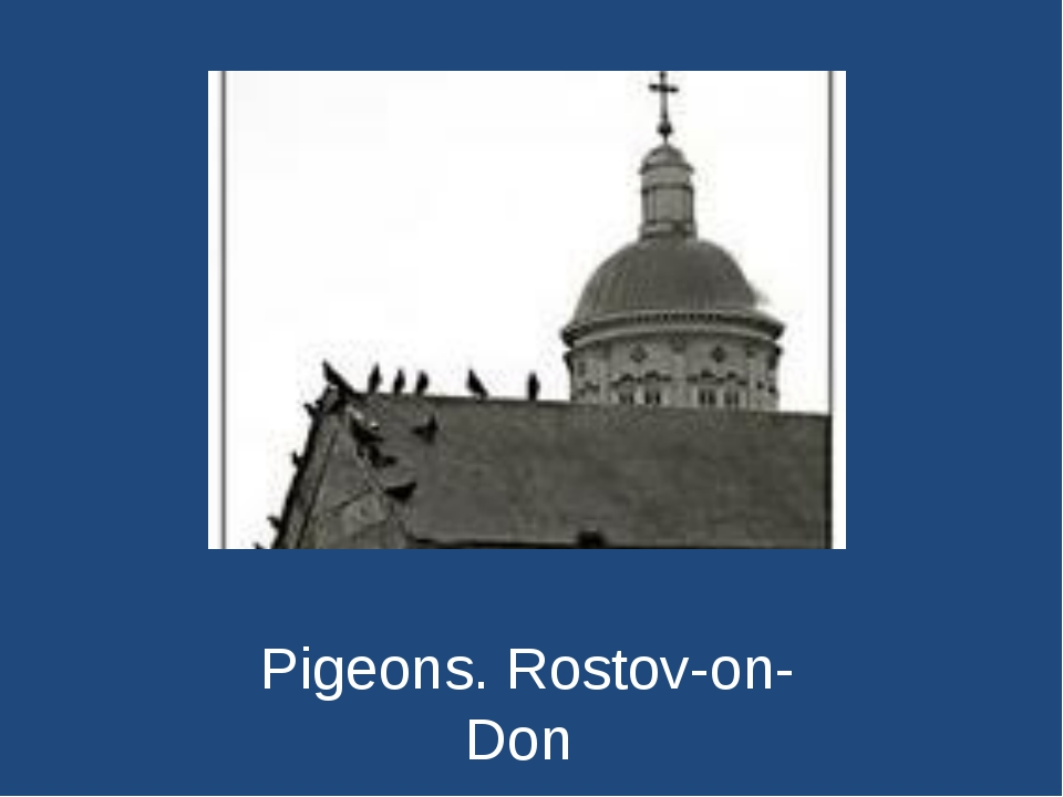 Pigeons. Rostov-on-Don
