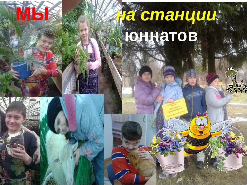 МЫ на станции юннатов